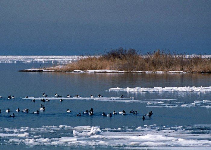 Nature Greeting Card featuring the photograph Open Water by Skip Willits