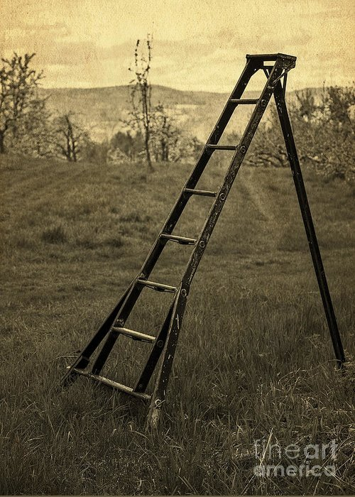 Ladder Greeting Card featuring the photograph Orchard Ladder by Edward Fielding