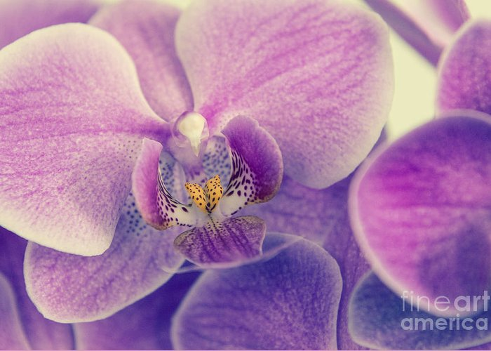 Asia Greeting Card featuring the photograph Orchid Lilac Dark by Hannes Cmarits