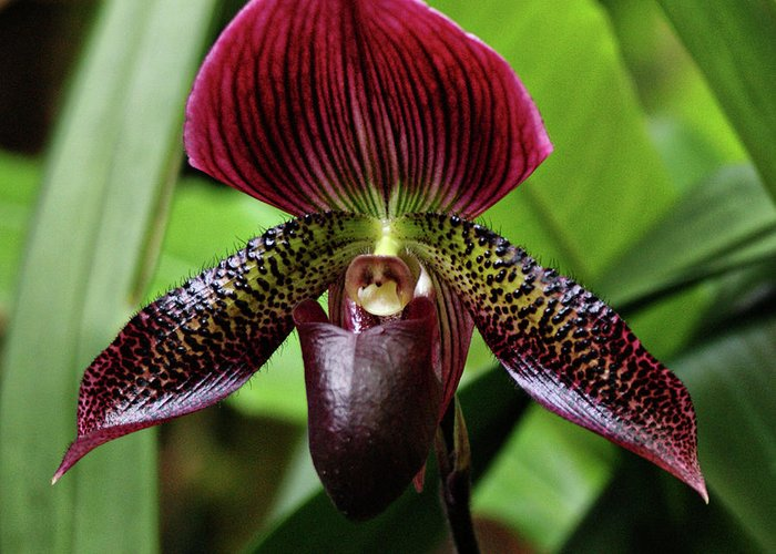 Orchid Greeting Card featuring the photograph Orchid by Sandy Keeton