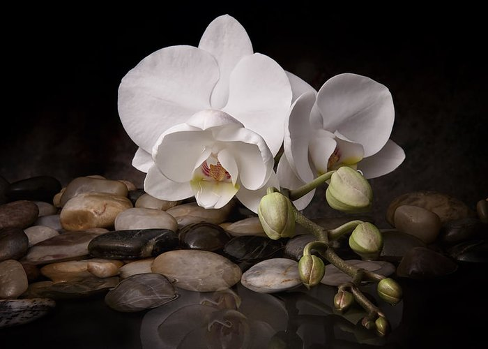 Arrangement Greeting Card featuring the photograph Orchid - Sensuous Virtue by Tom Mc Nemar