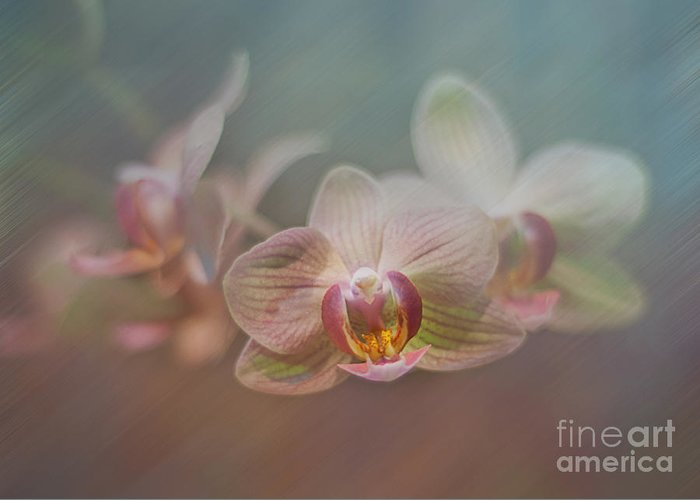 Orchid Greeting Card featuring the digital art Orchids In The Mist by John Kain