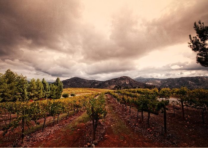Winery Greeting Card featuring the photograph Orfila by Ryan Weddle