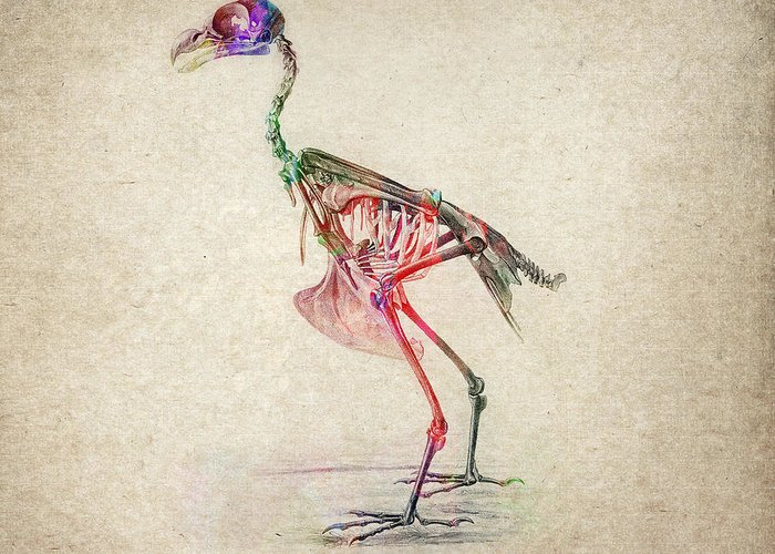 Bird Greeting Card featuring the drawing Osteology Of Birds by Aged Pixel