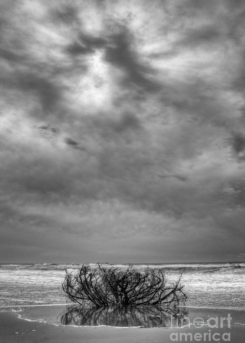 Driftwood Greeting Card featuring the photograph Outer Banks - Driftwood Bush On Beach In Surf IIi by Dan Carmichael
