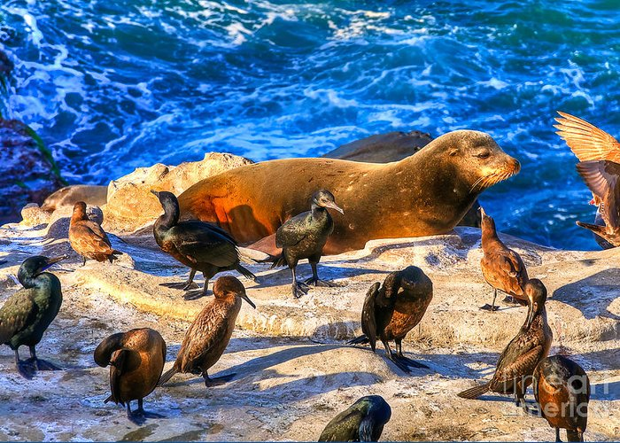 Seal Greeting Card featuring the photograph Pacific Harbor Seal by Jim Carrell
