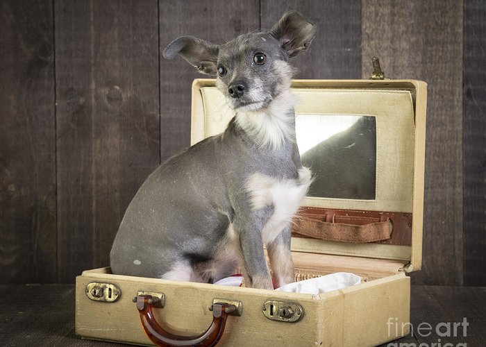 Dog Greeting Card featuring the photograph Packed And Ready To Go by Edward Fielding