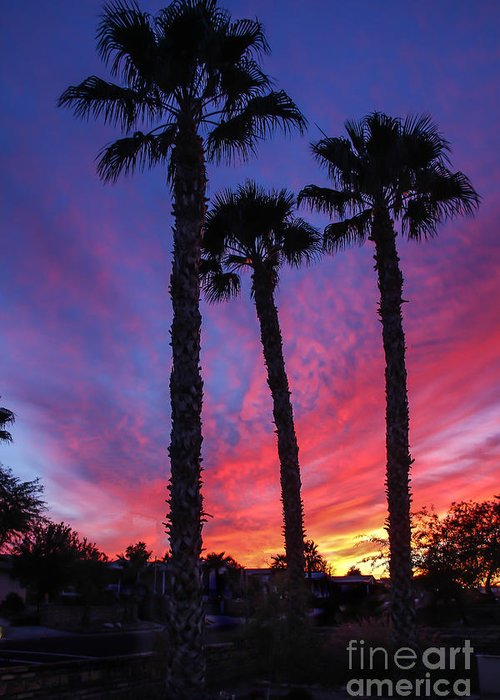 Sunrise Greeting Card featuring the photograph Palm Trees Sunset by Robert Bales