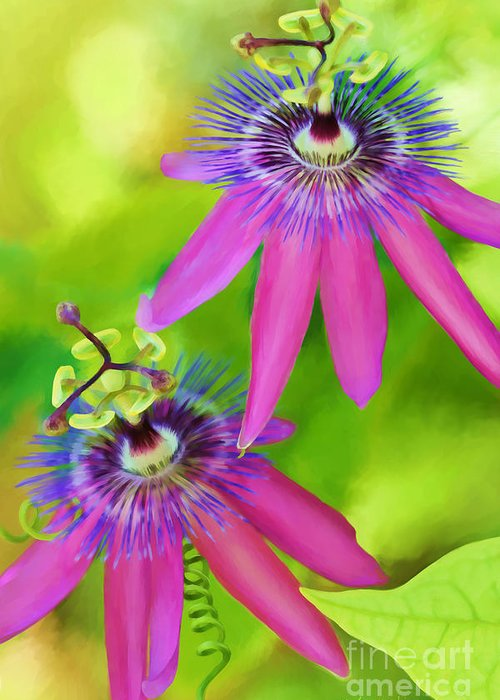 Passion Flower Greeting Card featuring the digital art Passiflora Piresii Vine - Passiflora Twins by Michelle Wiarda