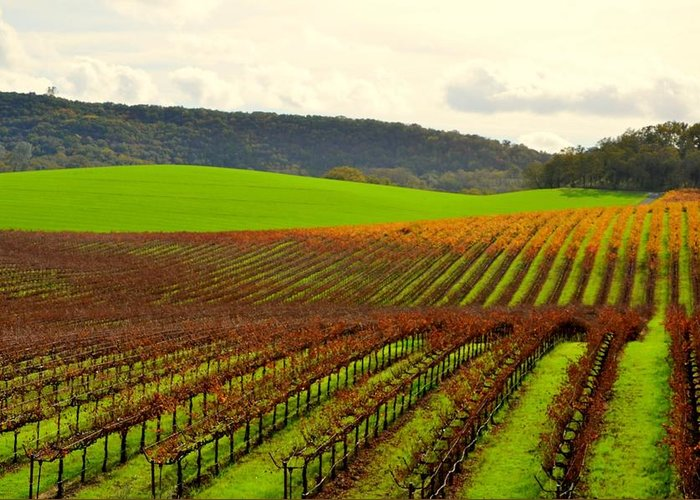 Vineyard Greeting Card featuring the photograph Pastoral Vineyards Of Asti by Antonia Citrino