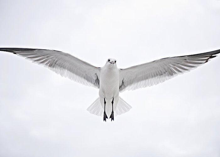 Seagull Greeting Card featuring the photograph Peace On Earth Good Will To Men by Bonnie Barry