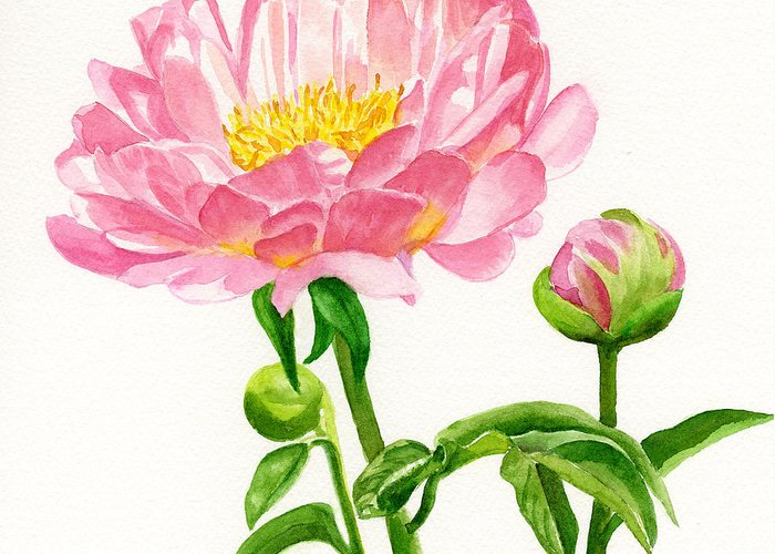 Peach Colored Greeting Card featuring the painting Peach Colored Peony With Buds by Sharon Freeman