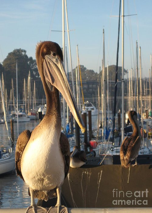 Pelican In Santa Cruz Greeting Card featuring the photograph Pelican2 by Theresa Ramos-DuVon