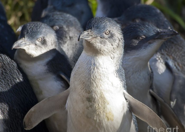 Birds Greeting Card featuring the photograph Penguins by Steven Ralser