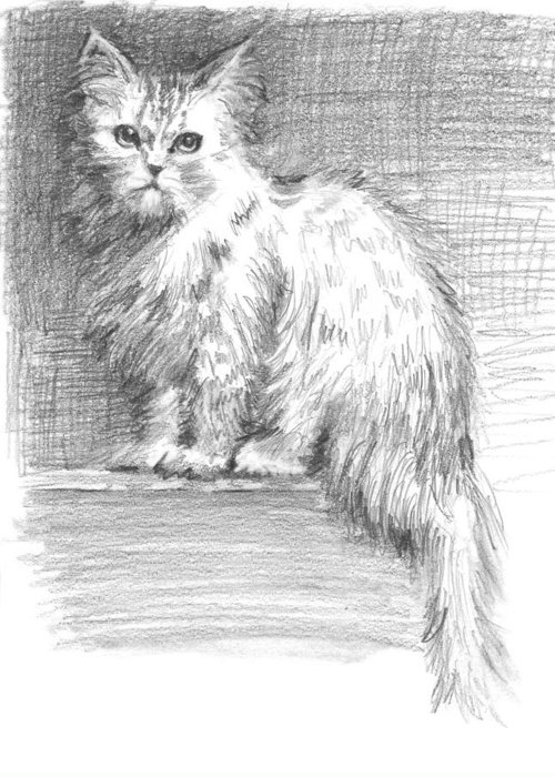 Persian Cat Greeting Card featuring the drawing Persian Cat by Sarah Parks