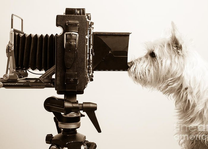 View Greeting Card featuring the photograph Pho Dog Grapher by Edward Fielding
