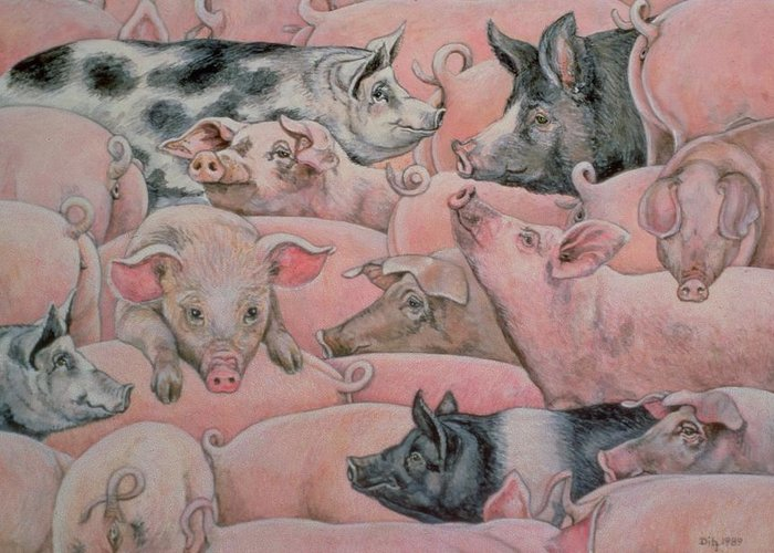 Pig Greeting Card featuring the painting Pig Spread by Ditz