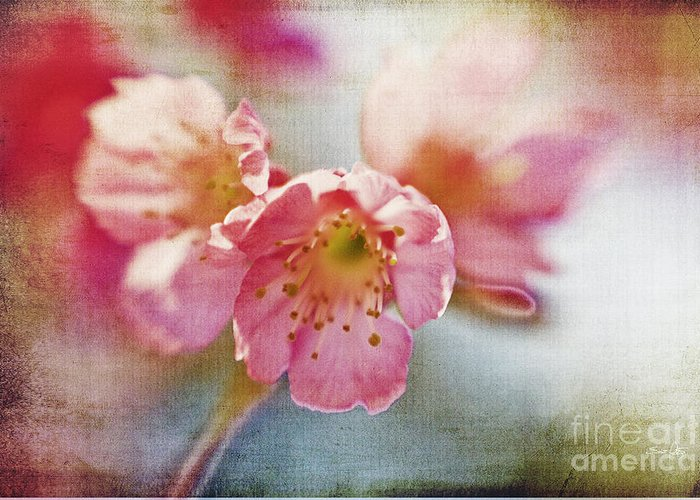 Lensbaby Greeting Card featuring the photograph Pink Blossom by Scott Pellegrin