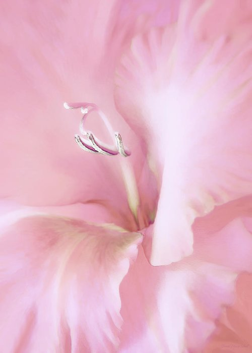 Gladiola Greeting Card featuring the photograph Pink Gladiolus Flower by Jennie Marie Schell