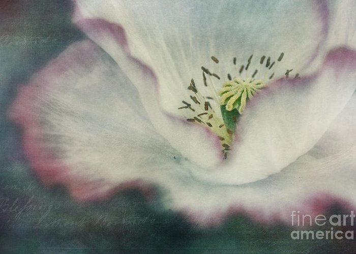 Poppy Greeting Card featuring the photograph Pink Rimmed Beauty by Priska Wettstein