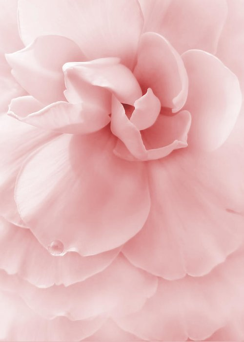 Begonia Greeting Card featuring the photograph Pink Ruffled Begonia Flower by Jennie Marie Schell