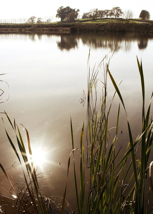 Water Greeting Card featuring the photograph Pond by Les Cunliffe