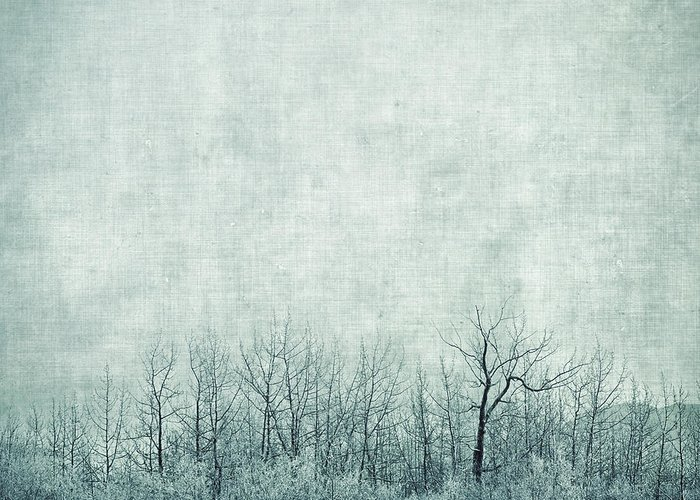 Trees Greeting Card featuring the photograph Pondering Silence by Priska Wettstein