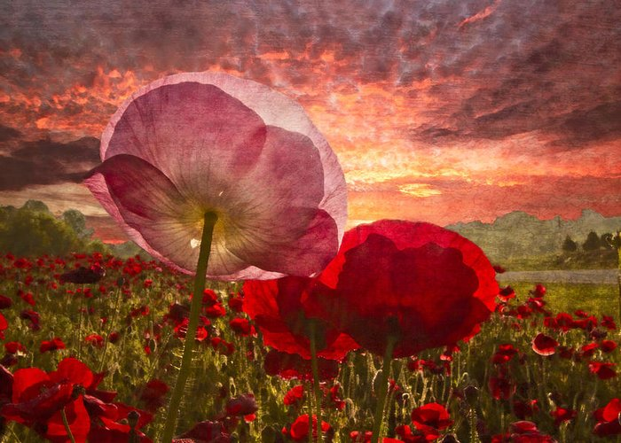Appalachia Greeting Card featuring the photograph Poppy Sunrise by Debra and Dave Vanderlaan