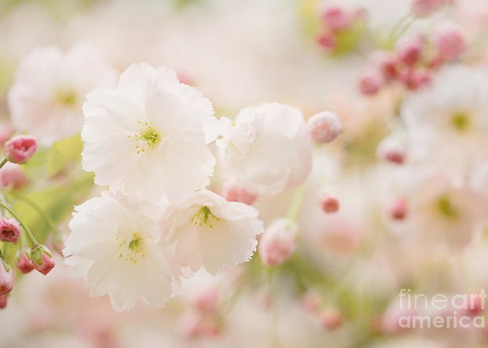 Blossom Greeting Card featuring the photograph Pretty Blossom by Natalie Kinnear