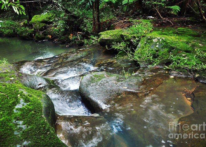 Photography Greeting Card featuring the photograph Pretty Green Creek by Kaye Menner