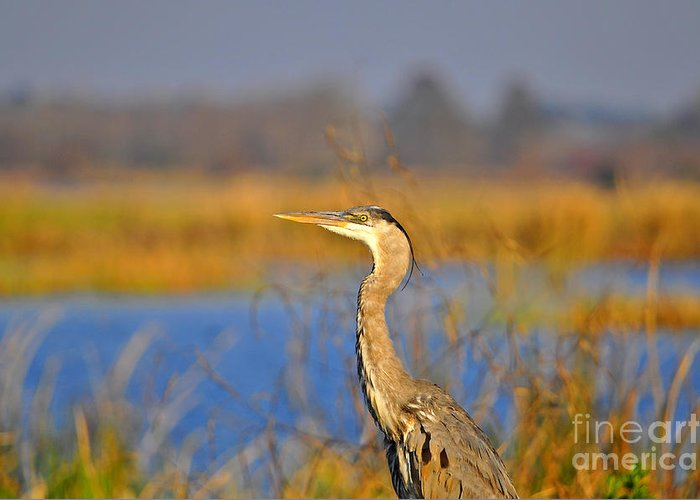 Heron Greeting Card featuring the photograph Proud Profile by Al Powell Photography USA