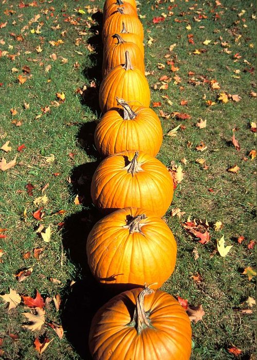 Decor Greeting Card featuring the photograph Pumpkins In A Row by Anonymous