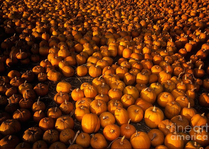 Agriculture Greeting Card featuring the photograph Pumpkins by Ron Sanford