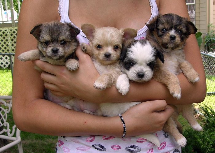 Puppies Greeting Card featuring the photograph Puppies In Maria's Arms by John Lautermilch