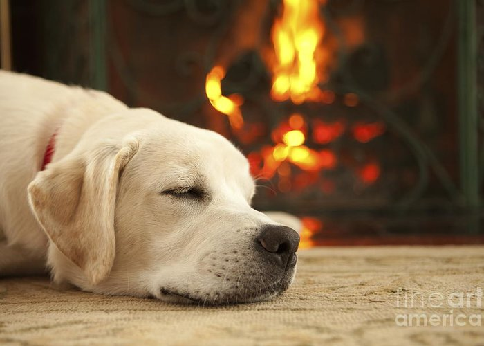 Puppy Greeting Card featuring the photograph Puppy Sleeping By The Fireplace by Diane Diederich