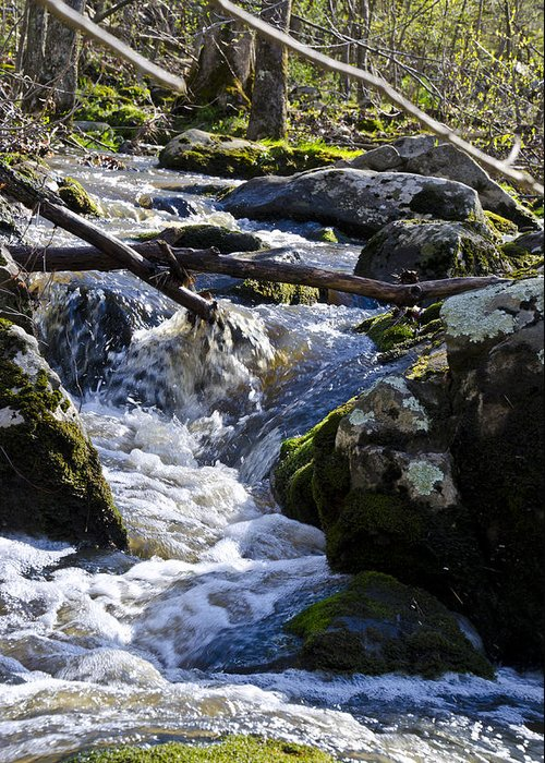 Pure Greeting Card featuring the photograph Pure Mountain Stream by Bill Cannon
