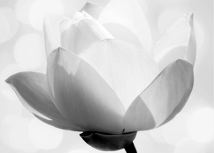 B&w Greeting Card featuring the photograph Pure by Jacky Gerritsen