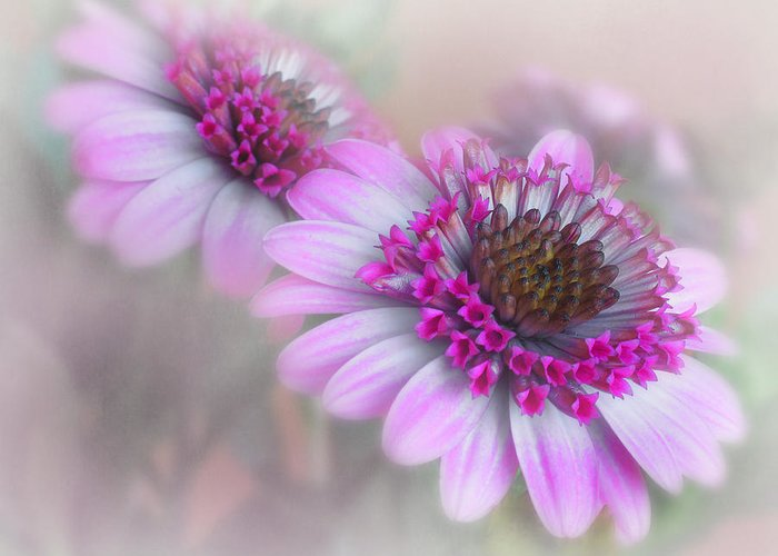 Flower Greeting Card featuring the photograph Purple Blooms by David and Carol Kelly