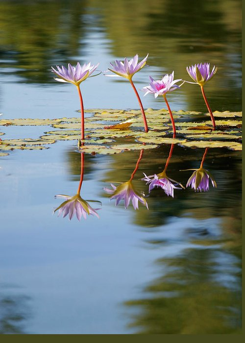 Lillies Greeting Card featuring the photograph Purple Lillies by Peter Tellone
