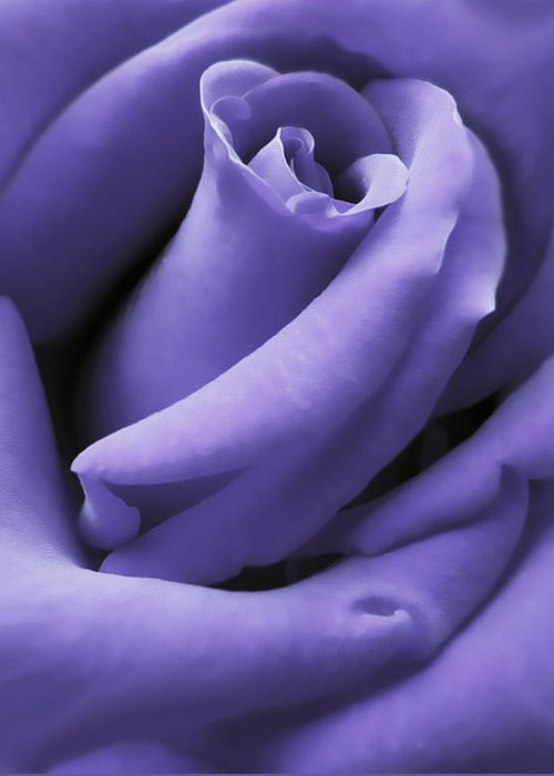 Rose Greeting Card featuring the photograph Purple Velvet Rose Flower by Jennie Marie Schell