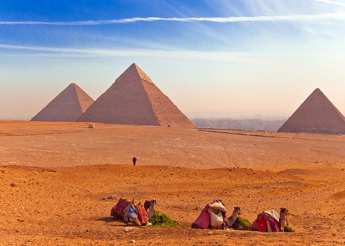 Pyramids Greeting Card featuring the photograph Pyramids And Camels by Matthew Bamberg