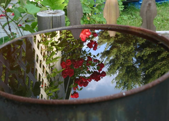 Roses Reflection In Rain Barrel Greeting Card featuring the photograph Rain Barrel by Carla Kutt