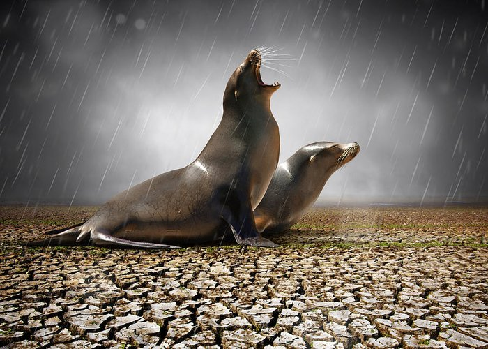 Animal Greeting Card featuring the photograph Rain Relief by Carlos Caetano