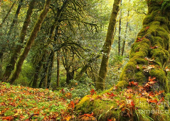 Oregon Rainforest Greeting Card featuring the photograph Rainforest Trunk by Adam Jewell