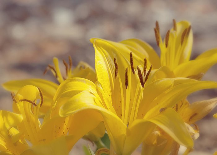 Yellow Flower Greeting Card featuring the photograph Reaching For The Light by Kim Hojnacki