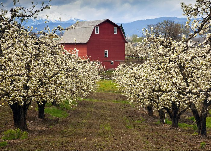 Barn Greeting Card featuring the photograph Red Barn Spring by Mike Dawson