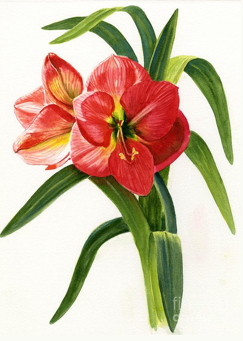 Red Greeting Card featuring the painting Red-orange Amaryllis by Sharon Freeman