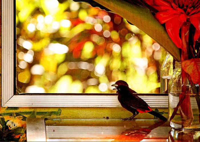 Bird Greeting Card featuring the photograph Reflecting On Beauty by Peggy Collins