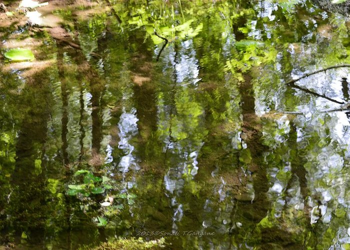 Nature Reflection Greeting Card featuring the photograph Reflection Of Woods by Sonali Gangane
