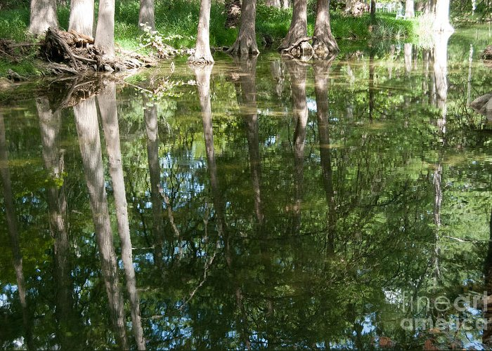 Landscape Greeting Card featuring the photograph Reflections by Barbara Shallue
